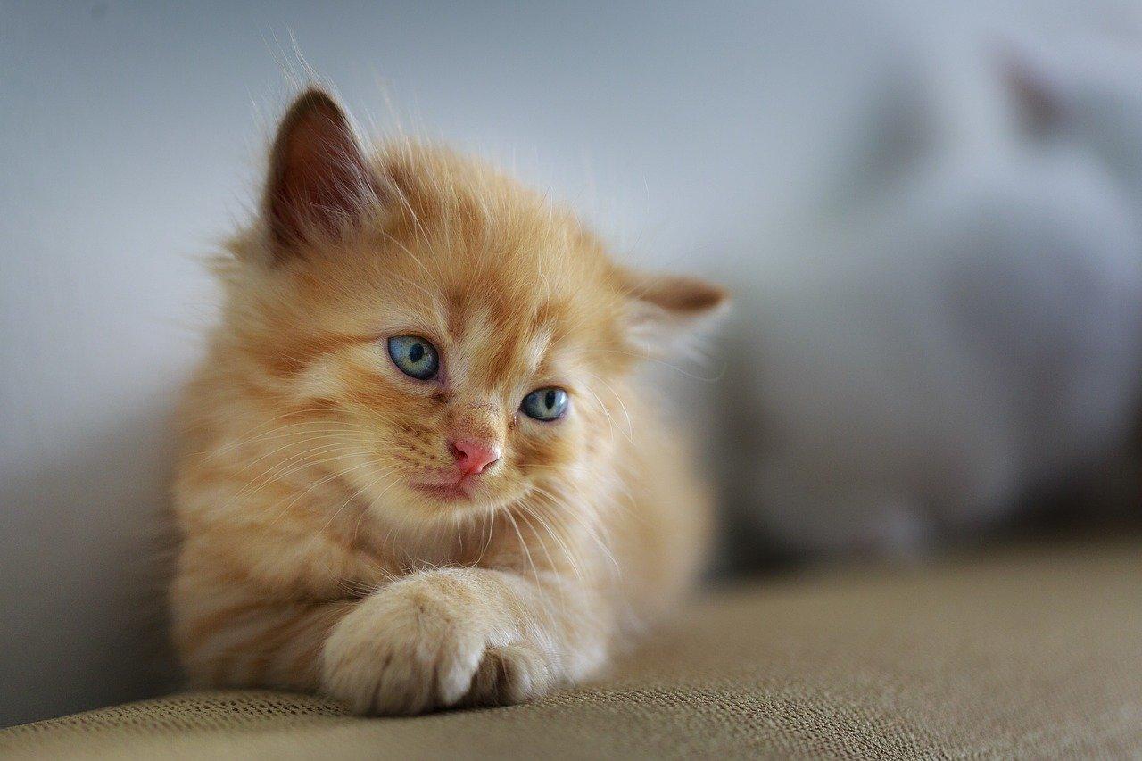 cat, sad, cute